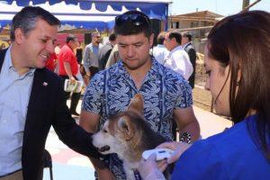 """""""Ley Cholito"""": Más de 90 mil mascotas han sido inscritas  en la región de O'Higgins en el primer año de la normativa."""